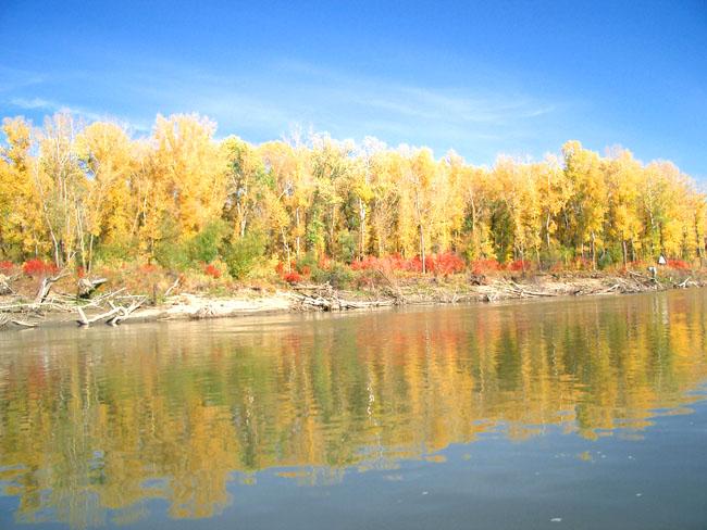Золотая осень на понтоне