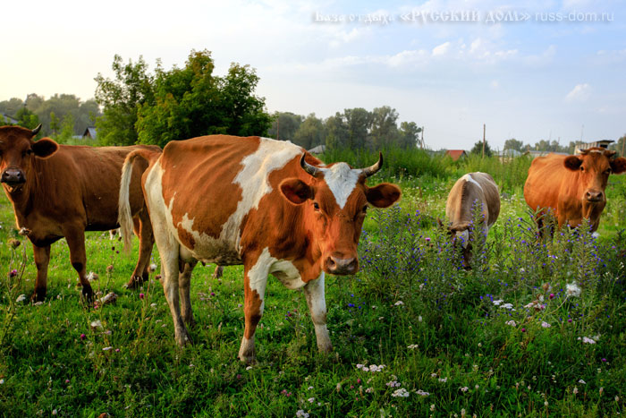 Наша ферма