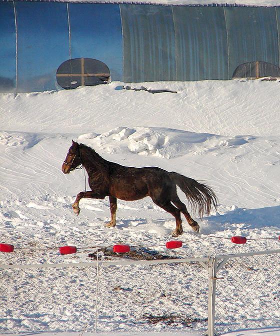 Лошадка в Чудо-Рыбе-Кит