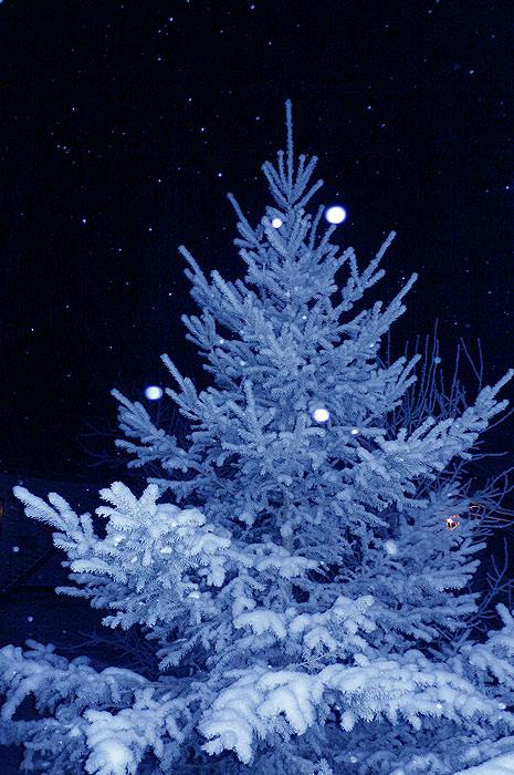 Волшебная зимняя ночь